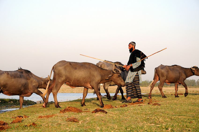 Dhumman guides his herd along the Asan River, where we camped for a week in heat over 100 degrees.