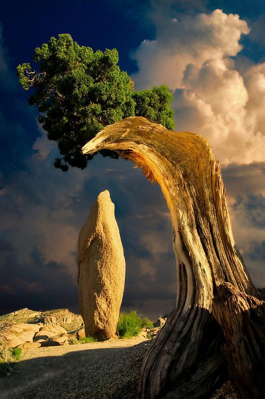 Rock pinnacle framed by juniper tree. Joshua Tree National Park, California