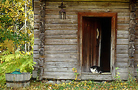 A cat relaxes on the step to the open door of a traditional log cabin in Finland