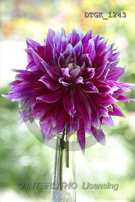 Gisela, FLOWERS, photos(DTGK1243,#F#) Blumen, flores, retrato