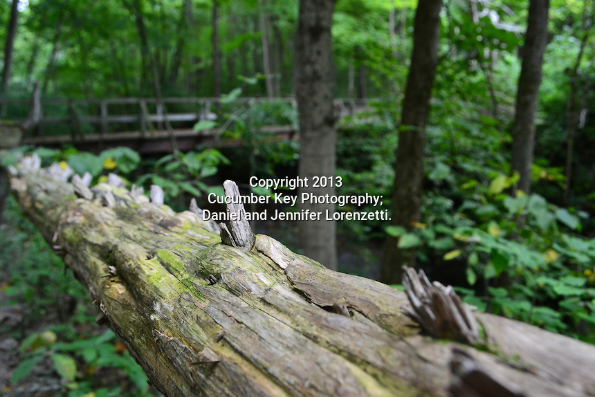 A log serves as a fence at Glen Helen Nature Preserve in Ohio.