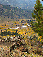 Fall colors paint a valley in Toiyabe National Forest.