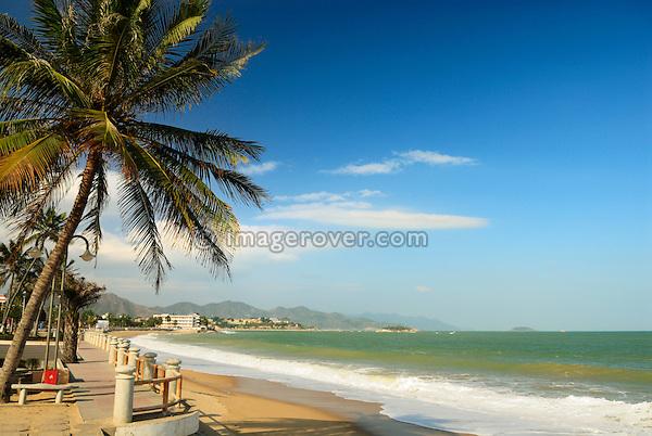 Asia, Vietnam, Nha Trang. Palm trees on Nha Trang's beach promenade Tran Phu.