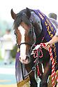 Horse Racing: Sankei Sho Centaur Stakes