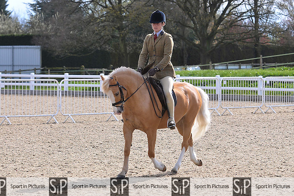 Class 12. BSPS Area 15 Essex april show. Brook Farm Training Centre. Essex. 16/04/2016. MANDATORY Credit Ellie Ingram/Sportinpictures - NO UNAUTHORISED USE - 07837 394578