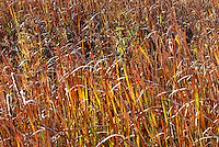 Wild golden grasses in Lake Erie wetlands and wildlife area