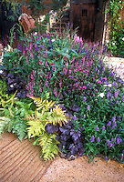 Garden mixed border bed with purple foliage Heuchera, Autumn Fern, purple flowers, mostly purple and pink color theme tones, rustic garden door and steps, patio