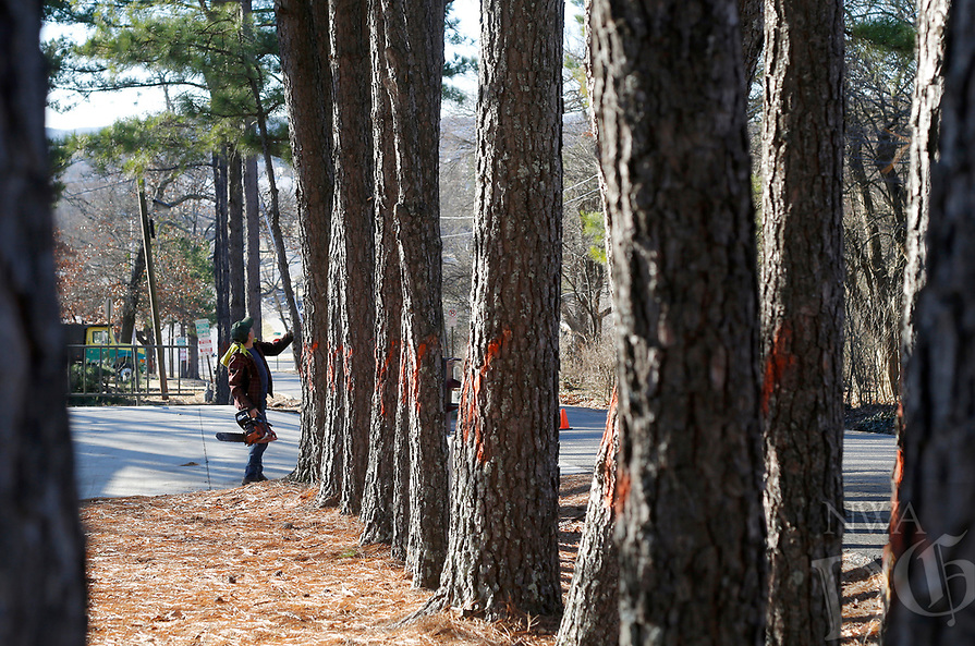 NWA Democrat-Gazette/DAVID GOTTSCHALK  Workers are visible Wednesday, January 9, 2019, preparing to remove trees from the area near the corner of Markham Road and Thomas Avenue in Fayetteville.