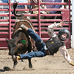 Caleb Heitman falls off during the Junior Boys calf riding event at the Fallon Junior Rodeo.  Photo by Tom Smedes.