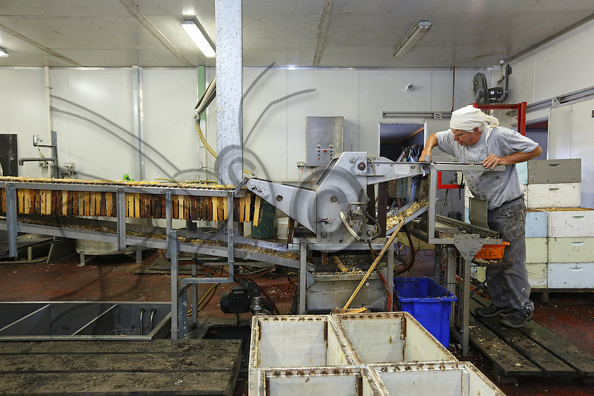 In Frank Malfroy's honey house, the honey extraction chain works at full capacity throughout the year. Frank produces nearly 50 tons of honey per year with 1,000 organically-raised hives.///Dans la miellerie de Franck Malfroy, la chaîne d'extraction du miel fonctionne à plein régime tout au long de l'année. Franck produit près de 50 tonnes de miel par an avec 1 000 ruches en bio.