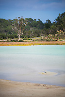 Kai Iwi Sand Lake, Kauri Coast, Northland Region, North Island, New Zealand