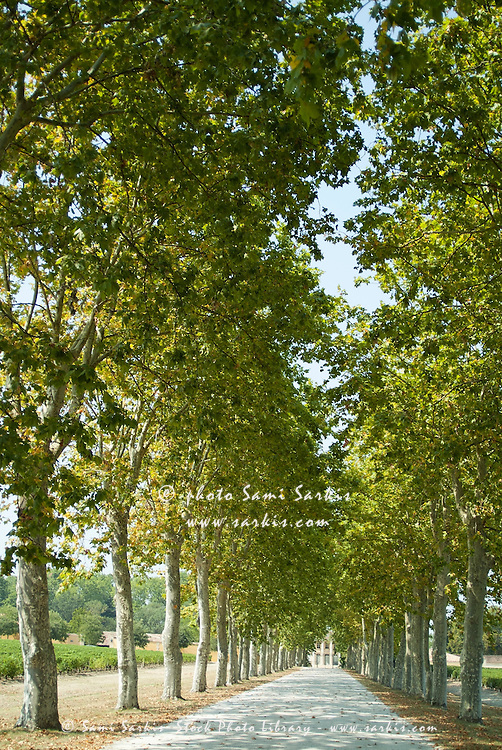 Treelined path to Chateau Margaux, Gironde, France.