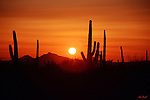 Saguaro Sunset<br /> Tucson, Arizona