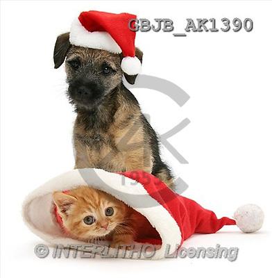 Kim, CHRISTMAS ANIMALS, photos(GBJBAK1390,#XA#) stickers
