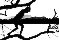 Comunidade Ind&iacute;genas da etnia Maku do alto rio Negro, em frente S&atilde;o Gabriel da Cachoeira.<br /> S&atilde;o Gabriel da Cachoeira, Amazonas, Brasil.<br /> Foto Paulo Santos.<br /> 1997
