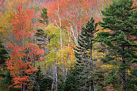 Fall Color in Maine