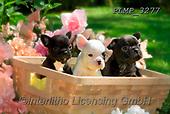 Marek, ANIMALS, REALISTISCHE TIERE, ANIMALES REALISTICOS, dogs, photos+++++,PLMP3277,#a#, EVERYDAY