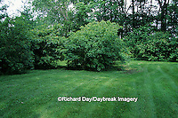 63808-02215 Gray (Cornus racemosa) & Silky Dogwood (Cornus amomum) bushes near woods showing edge & layers in yard IL