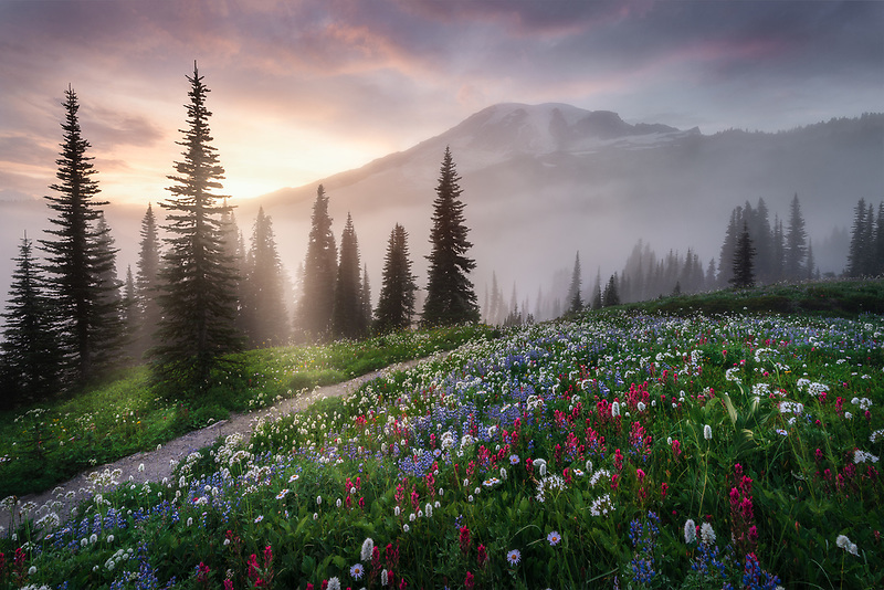 Mount Rainier with fog and wildflowers. Mount Rainier National Park, WA