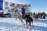 Andrew Nolan's dogs leap at the start of the 2015 Junior Iditarod on the Denali Highway on on Sunday March 1, 2015.<br /> <br /> <br /> <br /> (C) Jeff Schultz/SchultzPhoto.com - ALL RIGHTS RESERVED<br />  DUPLICATION  PROHIBITED  WITHOUT  PERMISSION