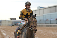 HOT SPRINGS, AR - FEBRUARY 19: Seven Trumpets #6, with jockey Robby Albarado aboard after the running of the Southwest Stakes at Oaklawn Park on February 19, 2018 in Hot Springs, Arkansas. (Photo by Justin Manning/Eclipse Sportswire/Getty Images)