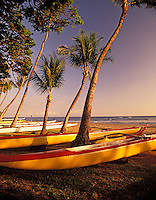S00100M.tiff   Canoes with palm trees lined up for upcomming boat race. Launiupoko State Wayside Park, Hawaii