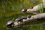 Animals: Turtles and Tortoises