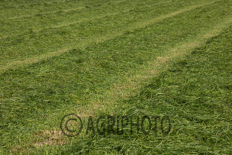 22.5.2020 Grass cut for hay<br /> ©Tim Scrivener Photographer 07850 303986<br />      ....Covering Agriculture In The UK....