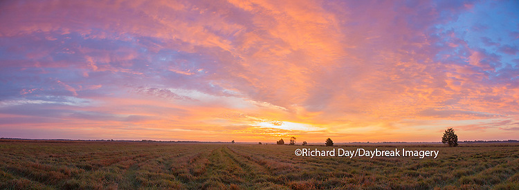 63893-02701 Sunrise at Prairie Ridge State Natural Area, Marion County, IL