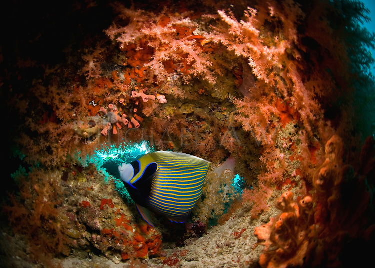 Maldives, soft corals cavern