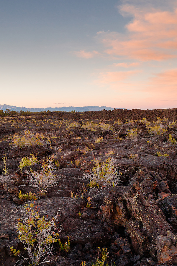 Goldenbush grows out of the rocks at Craters of the Moon National Preserve.