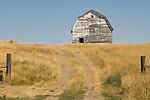Weathered white barn on a hill behind a gate, North Dakota