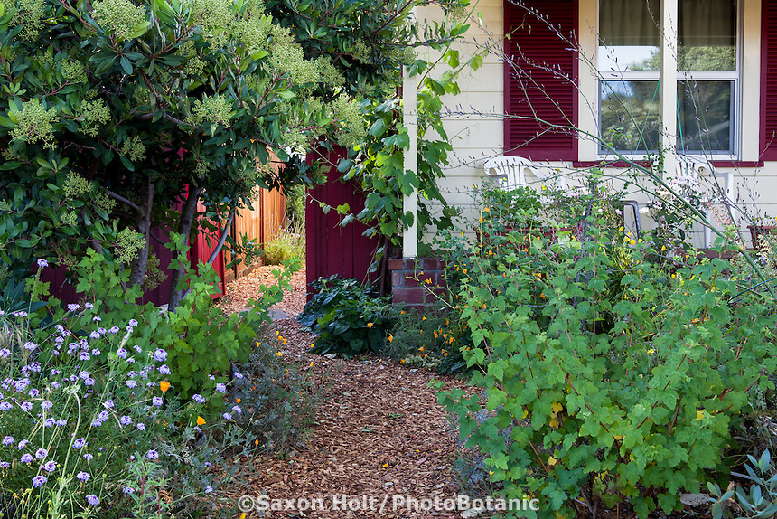 Mulched path through front yard Sibley garden Richmond, California; Bringing Back the Natives Tour.