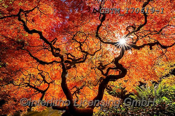 Tom Mackie, LANDSCAPES, LANDSCHAFTEN, PAISAJES, photos,+America, American, Americana, Kubota Garden, North America, Pacific Northwest, Seattle, Tom Mackie, USA, Washington, atmosphe+re, atmospheric, autumn, autumnal, colorful, colourful, dramatic outdoors, fall, horizontal, horizontals, inspiration, inspir+ational, inspire, japanese garden, japanese maple, landscape, landscapes, leaf, leaves, mood, moody, natural, nature, no peop+le, orange, peace, peaceful, red, reflecting, reflection, reflections, scenery, scenic, sea,America, American, Americana, Kub+,GBTM170619-1,#l#, EVERYDAY