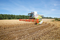 Harvesting Venture winter barley - Norfolk, July
