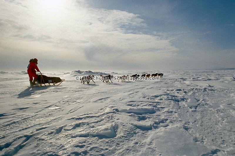 Susan Butcher On Norton Sound Near Elim Checkpoint During 1991 Iditarod Sled Dog Race Alaska