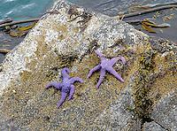 July 2912: Lopez Island, WA