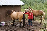 Wanderritt mit Pony in Nord-Norwegen, Mädchen putzt ihr Pony, Wander-Ausritt, Ausritt, Reiten
