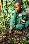 Anti-poaching snare removal team member, Godfrey Nyesiga, pointing to illegally set foot snare, Kibale National Park, western Uganda