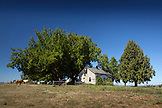 USA, Oregon, Willamette Valley, old farmhouse and horses near Soter Winery, Carlton