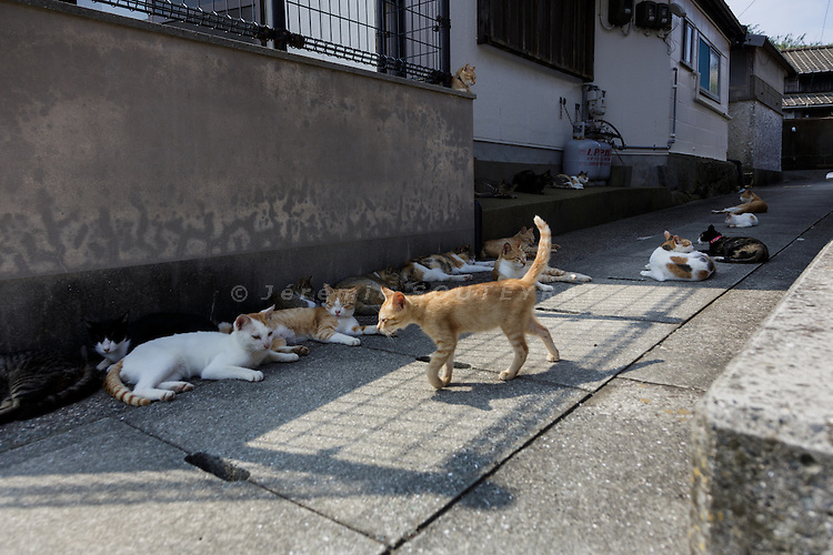 Aoshima, Ehime prefecture, September 4 2015 - Cats lazing in the afternoon.<br /> Aoshima (Ao island) is one of the several &laquo; cat islands &raquo; in Japan. Due to the decreasing of its poluation, the island now host about 6 times more cats than residents.