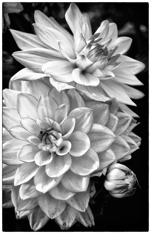Bloom in Monochrome