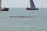 ZEILEN: STAVOREN: IJsselmeer, 26-07-2014, SKS skûtsjesilen, ©Martin de Jong