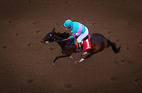 ARCADIA, CA - FEBRUARY 04: Royal Moe #1, ridden by Victor Espinoza defeats Irap #2, ridden by Mario Gutierrez and Sheer Flattery #5, ridden by Mike Smith to win the Robert B. Lewis Memorial Stakes at Santa Anita Park on February 4, 2017 in Arcadia, California. (Photo by Alex Evers/Eclipse Sportswire/Getty Images)
