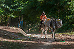 A boy rides a donkey in Picmy, a village on the Haitian island of La Gonave, where Service Chrétien d'Haïti has helped survivors of the massive 2016 Hurricane Matthew. SCH is a member of the ACT Alliance, and providing donkeys to affected families has been a common practice, as the animals make it easier to move cops to market, and their owners can sell the offspring for a profit.