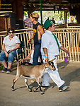 4-H kids and goats. Opening day of the 80th Amador County Fair, Plymouth, Calif.<br /> .<br /> .<br /> .<br /> .<br /> #AmadorCountyFair, #1SmallCounty Fair, #PlymouthCalifornia, #TourAmador, #VisitAmador