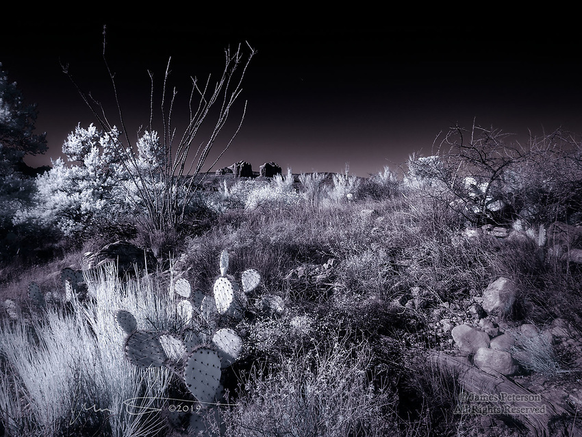 Cathedral Rock from Chapel Trail (Infrared) ©2019 James D Peterson.  The desert territory around Sedona, Arizona, is unlike any other.  In addition to our famous red rocks, we also have a unique blend of low and high desert flora.  That makes sense, since Sedona is in the transition zone between the two types of desert.  But in any case, an infrared photo gives our desert plants a chance to show off their invisible (to the naked eye) glow.