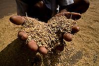 Arroz | Rice