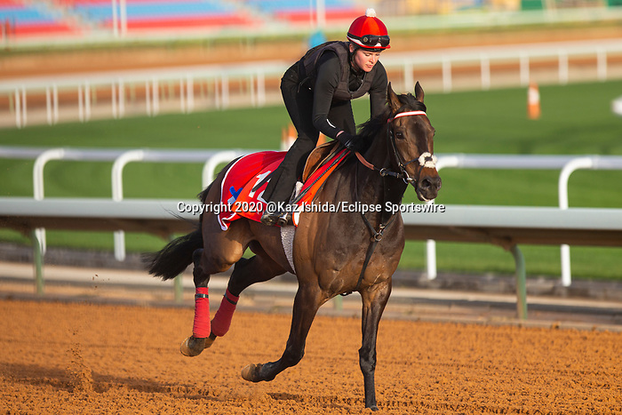RIYADH,SAUDI ARABIA-FEB 27: Prince of Arran excercises for Longines Turf Handicap at King Abdulaziz Racetrack on February 28,2020 in Riyadh,Saudi Arabia. Kaz Ishida/Eclipse Sportswire/CSM