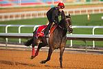 RIYADH,SAUDI ARABIA-FEB 27: Prince of Arran excercises for Longines Turf Handicap at King Abdulaziz Racetrack on February 28,2020 in Riyadh,Saudi Arabia. Kaz Ishida/Eclipse Sportswire/CSM